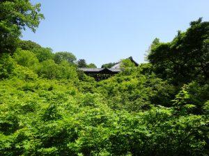 新緑溢れる東福寺